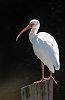 -ibis-disneyworld.jpg