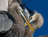 -348-herons-picasso-wall-.jpg