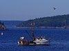 -imgp4835_boat_maine_barharbor_ocean_gull_bird.jpg