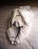 -towel-dog-board-ship-1.jpg