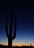-saguaro-organ-pipe-national-park-small.jpg