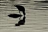 -birddrinkingwater.png