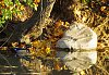-mirror-wood-duck-butler-2.jpg