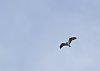 -imgp4933-eagle-flight-1-b.jpg