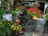 -cheery-bikes_resize.jpg