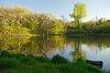 -pond-lush-forest-battle-creek-park.jpg