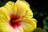 -yellow-flower2.jpg