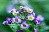 -flowers_to_be.jpg