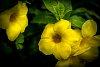 -pentaxflower.jpg