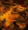 -autumn-leaf.jpg
