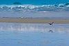 -great-blue-heron-centennial-park-white-rock-2014-0389-3.jpg
