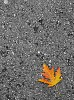 -autumn.jpg