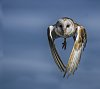 -owl-flight.jpg