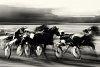-voets-e-horse-race.jpg