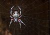-spider-web.jpg
