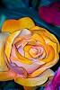 -italy-2007-flower-macro.jpg