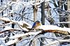 -blue-bird.jpg