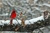 -feb-snow-storm-winter-birds-11411-11-.jpg