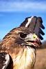 -hawk-eye-1.jpg