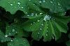 -spring-rain-4983.jpg