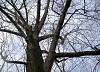 -tree.jpg