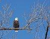 -eagle031118.jpg