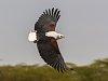 -birds_keenia_naivasha_imgp7592_270218.jpg