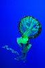 -jelly-fish-illuminated.jpg