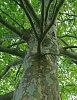 Trees-tree-da15.jpg