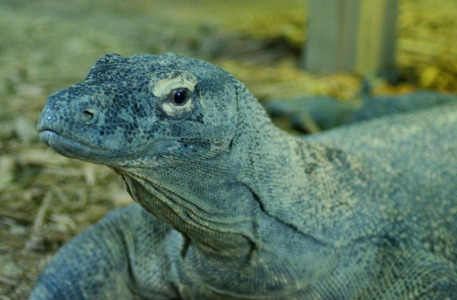 Name:  KomodoDragon2009-09-30_0565.jpg