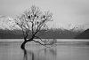 -wanaka-tree.jpg