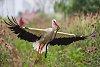 -stork-snake-foto-valeriu-leonov.jpg