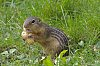 -_igp4166-what-do-you-mean-your-peanut-small.jpg