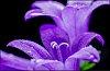 -macro-bloem-04.jpg