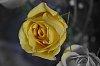 -flower-imgp0532-edit.jpg