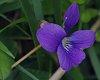 -imgp4308-violet.jpg