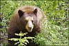 -bear-photo-size-jeanettes.jpg