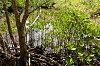 -mangrove-swamp.jpg