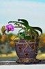 -orchid_gimp.jpg