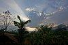 -jungle-light-beams_edited-1.jpg