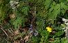 -flowers_001.jpg