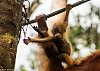 -baby-orangutan-hands.jpg