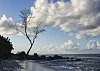 -lonely-tree-1.jpg