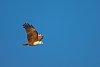 -kite-1.jpg