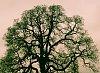 -gas-eating-tree-3.jpg