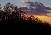 -treetop-sunset.jpg