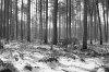 -trees-hdr.jpg