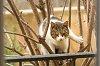 -straycat-2.jpg