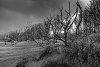 -spooky-landscape-kennermerduinen-netherlands.jpg