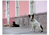 -dogs-maipo-150518-w900-h800.jpg
